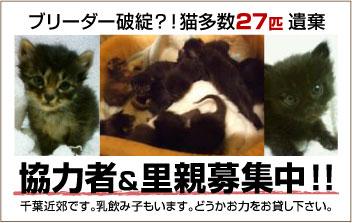 chibacats_help_please.jpg